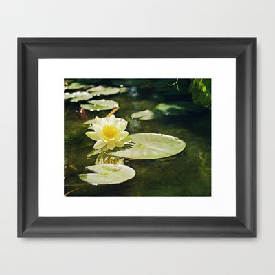 Lotus Blossom Framed Art Print by Around the Island Photography on Society6