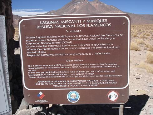 flamingos no deserto do atacama - Pesquisa Google