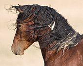 Wild Stallion's Profile by Carol Walker.