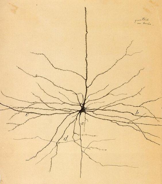 Dibujo de neurona de Santiago Ramón y Cajal