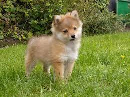 kleine honden rassen - Google zoeken