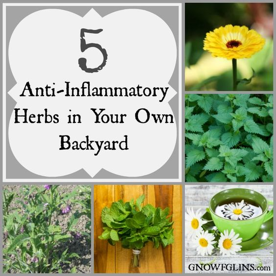"""""""One of the reasons I love herbs so much is because of their ability to take care of every day symptoms. Did you sprain your wrist? Yep, there's a plant that can help. Need something to soothe the baby's bug bites? Check — that one's covered too. Here are five seemingly common plants that happen to be anything but common when it comes to reducing inflammation and relieving swelling and pain."""" TraditionalCookingSchool.com"""