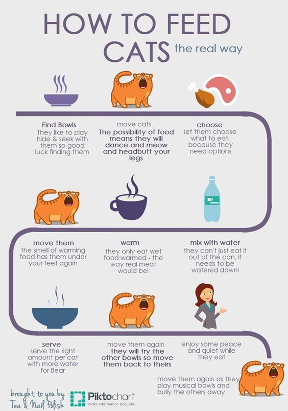 How To Feed Cats Cat Care Tips Cat Diet Cat Infographic