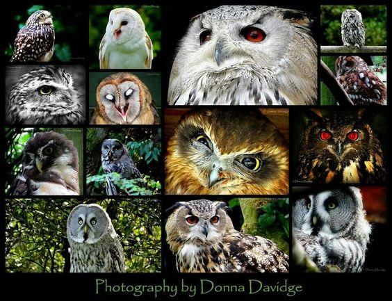 Donna's owls
