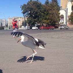"""Знову лелека з""""явився в  Харкові на найбільшому майдані Європи!Дай Боже,щоб на добро!!!"""