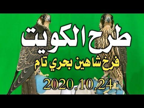 طرح الكويت فرخ شاهين بحري تام 2020 10 24 طرح اليوم Youtube Comic Book Cover Falcon Hunting Comic Books
