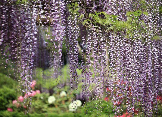 15 Plants Never To Grow In Your Yard Fast Growing Shade Trees Garden Pests Plants Under Trees