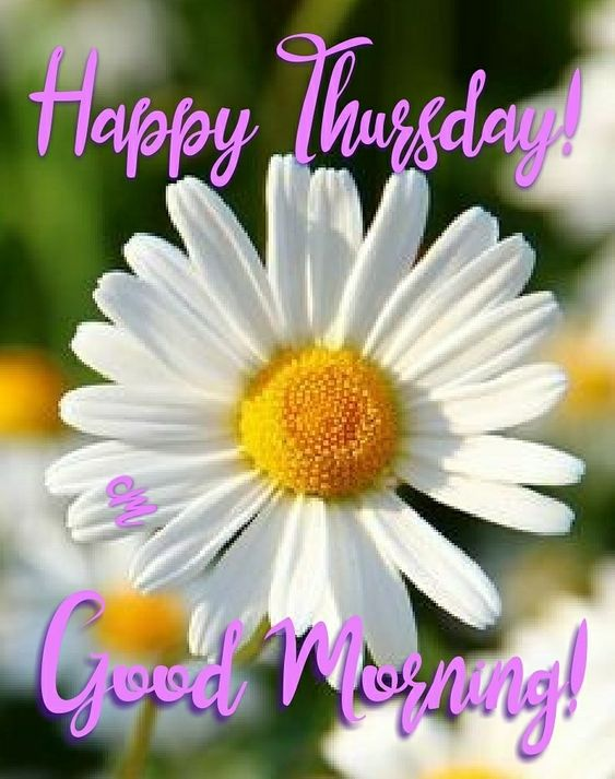 Good Morning! Happy Thursday! #goodmorningworld #goodmorningpost #goodmorning #post #world #gm #gmw #good #morningpost #morning #thursday #happy #happythursday #daisy #flowers #thursdaymood #happiness #lifeisart #flowerart #beauty #beautyinfluencer #nature #images #daisies #dreamincolor #kindnessrocks #spring #summertimefeeling