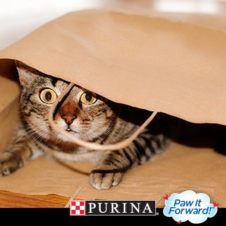 Celebrate #NationalPetMonth with Purina®! We have 31 ways to share & show your love. #PawItForward with Way 14: http://bit.ly/QBYbJu