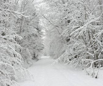nature winter snow trees forest path HD Wallpaper