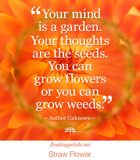 Every garden has some weeds, as every mind has negative thoughts. It takes effort to pull those weeds. A chore worth spending time on to create the garden of my dreams and the attitude I want to have. It's a continual process.