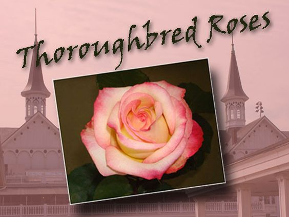 Thoroughbred Roses inspired by Kentucky Derby