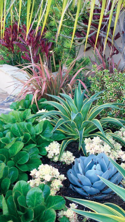 Drought tolerant garden Drought tolerant and Gardens on