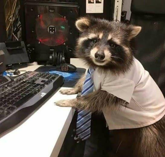 18 Memes de mapaches que harn mucho mejor tu da