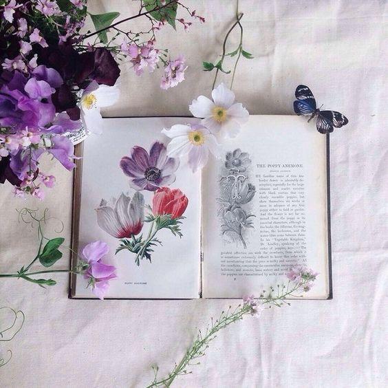 книга, лепестки, цветы, гербарий