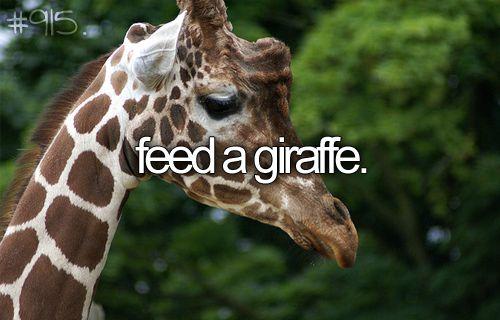 feed a giraffe.
