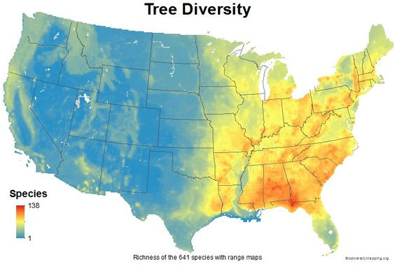 Mapping the USA's Tree Diversity