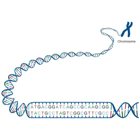 Biotechnology, Molecular and Cellular Biology, or Genetics, and Which School?
