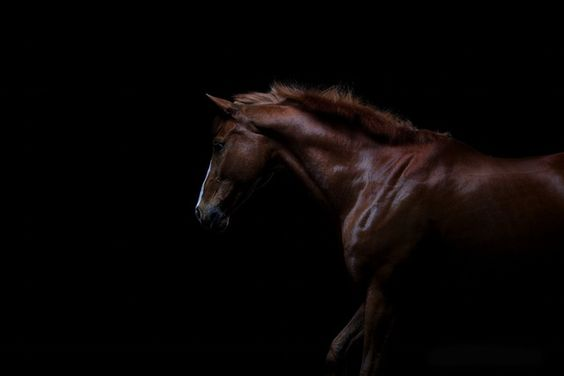 power and grace -  from EQUS - photo book on equine beauty