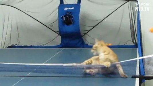 This cat plays ping pong better than you #news #alternativenews