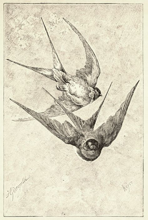 Amazing perspective in this drawing or etching of graceful swallow birds. Plus