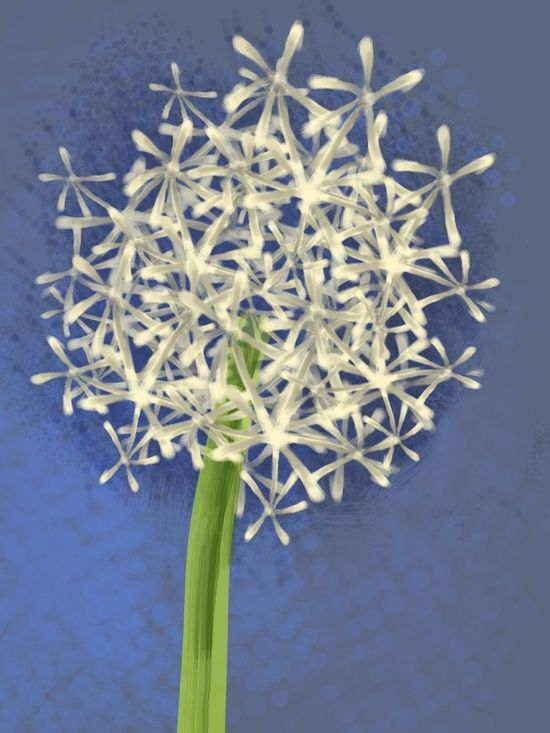 Flower 43: Unknown Artist