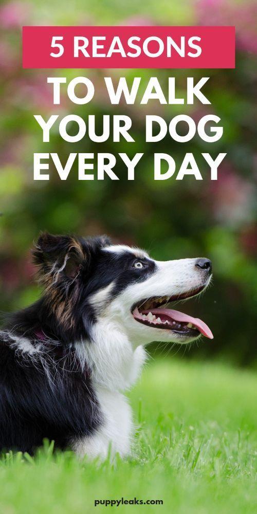 5 Reasons To Walk Your Dog Every Day Dog Walking Dog Training