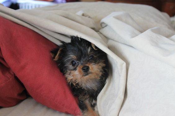 My cousins dog Winston(: