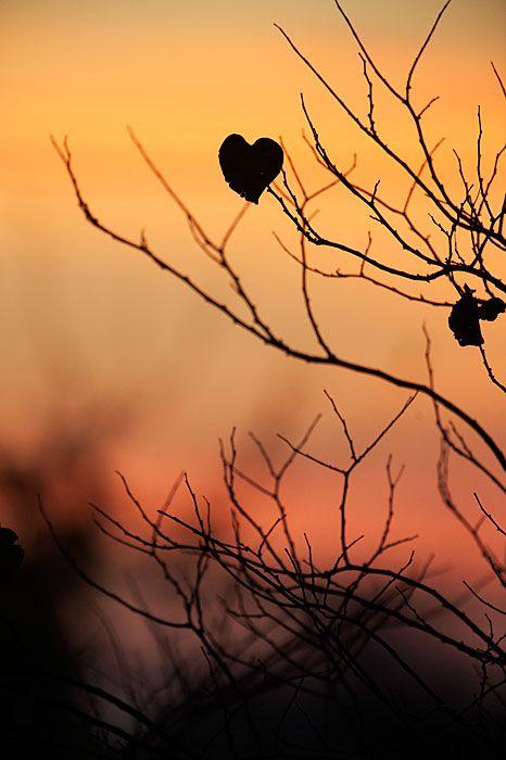 Heart Shaped Leaf Silhouette:
