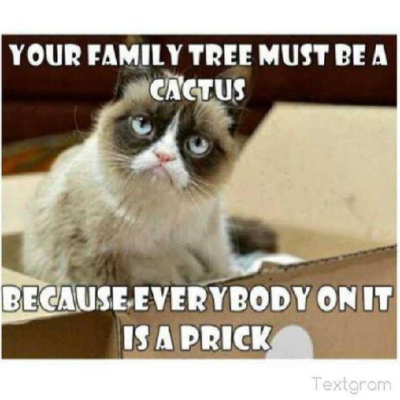 Sarcastically Funny Meme : Grumpy cat funny humor meme
