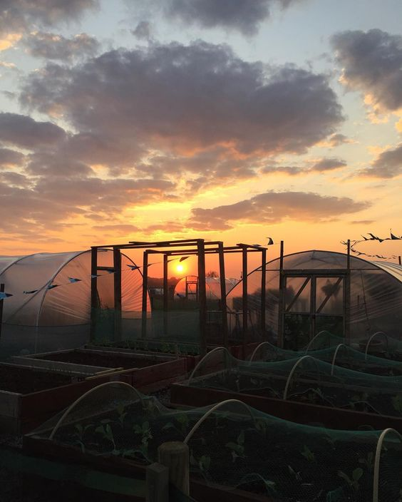 Red sky at night. Allotment delight.