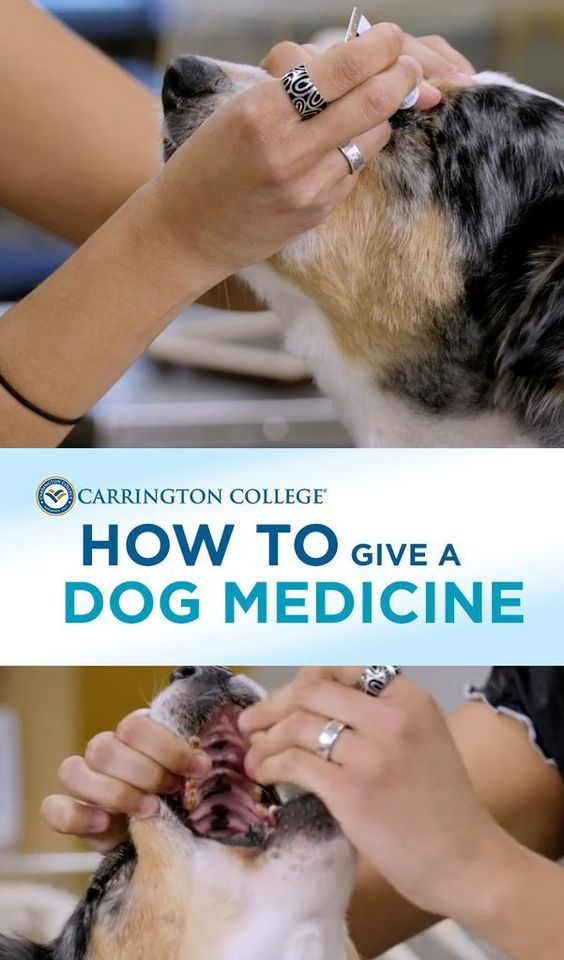 Tips on how to give your dog a medicine.