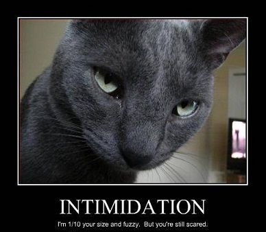 cat intimidated - Google Search