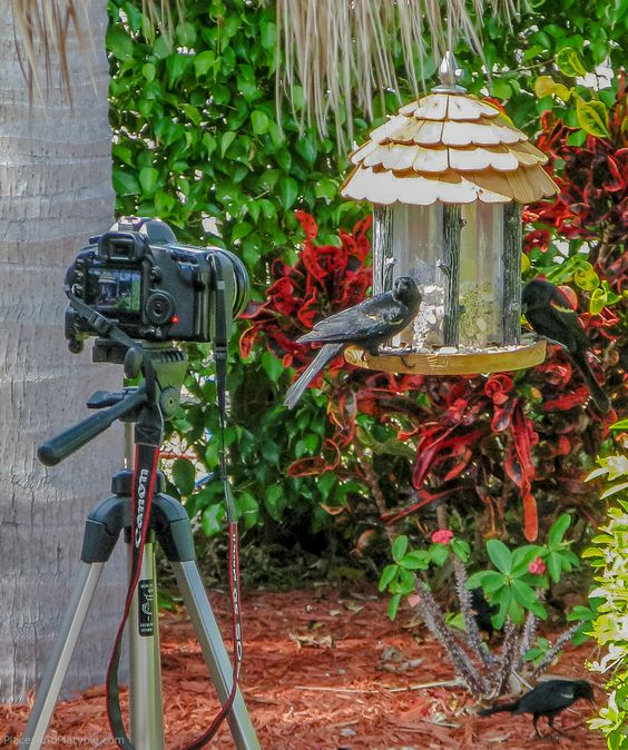"""Practicing """"ornithological paparazzi,"""" sitting in the lounger with a radio remote, taking pictures of the birds on our feeder."""
