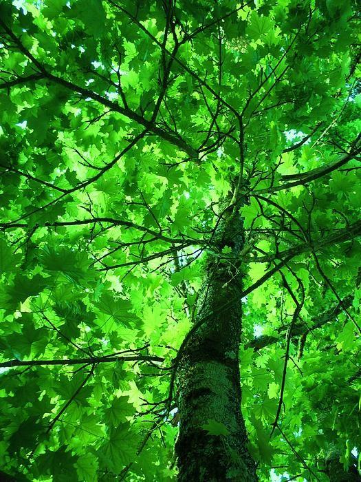 Niki's Tree