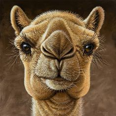 artists drawings of camels | ... animal art saverio polloni critter clips camel art camel animal: