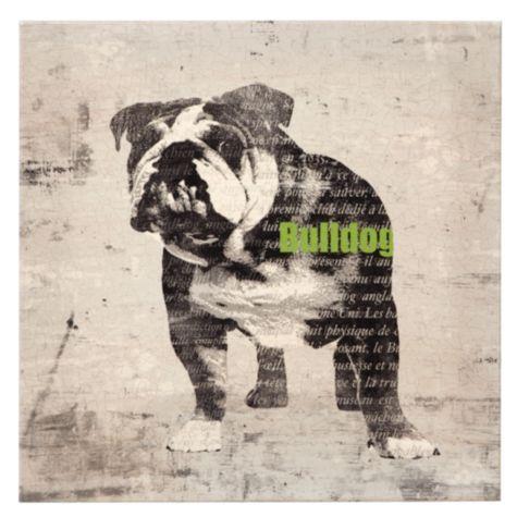 Bull Dog from Z Gallerie