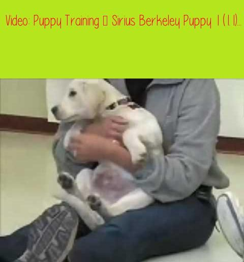 Puppy Training Sirius Berkeley Puppy 1 1 1 Prefer Text Okay So