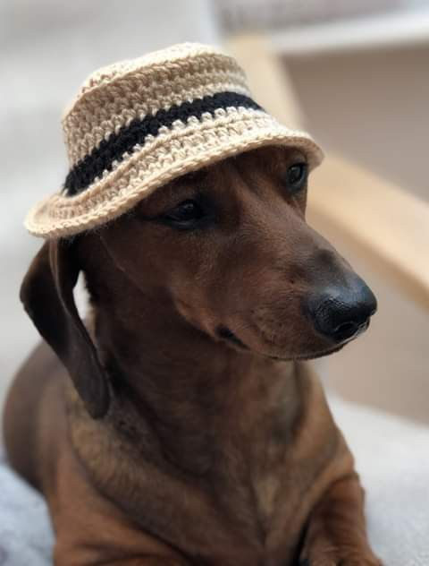 Pin By Trucy Baker On I Love Doxies Dog Jumpers Dachshund Hat Sausage Dog