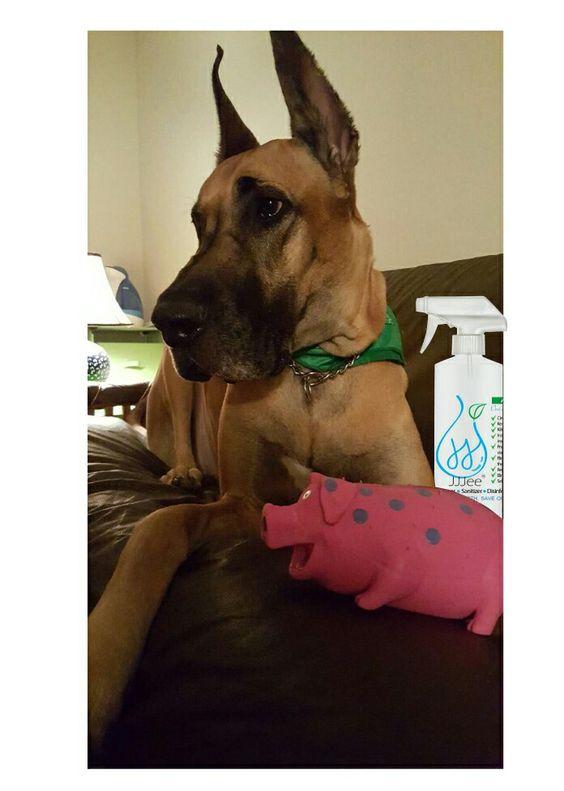 When JJJee meets a Great Dane's toy. No dirt, no bacteria, no rinsing.