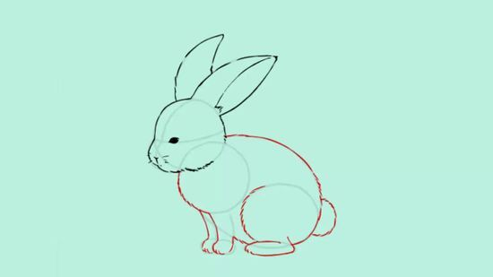 Image Result For Side View Cute Bunny Illustration Rabbit
