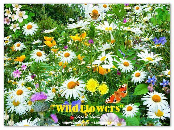 """""""A primavera chegará, mesmo que ninguém mais saiba seu nome, nem acredite no calendário, nem possua jardim para recebê-la"""" - Cecília Meireles"""