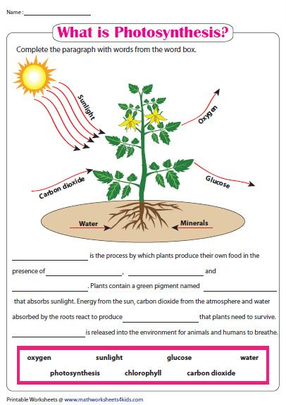 What Is Photosynthesis Photosynthesis Worksheet Photosynthesis