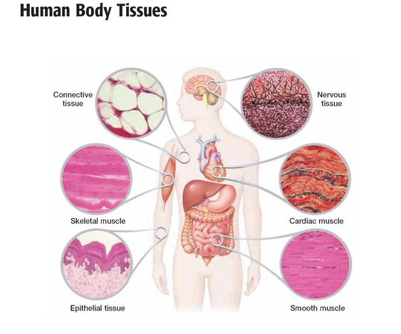 Anatomy and Physiology Questions - All Grades