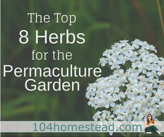 The top 8 #herbs for permaculture gardening