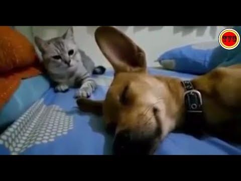 Dog Farts And Cat Hits Him Youtube Dog Farts Sleeping Dogs Dogs