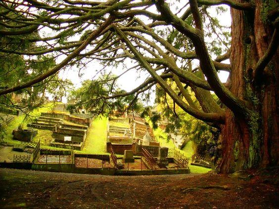 Beautiful Dunedin, New Zealand.....www.transfercar.co.nz