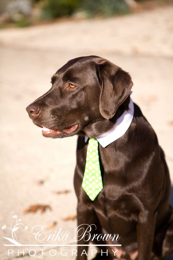 Such a classy gent | Erika Brown Photography. #wedding #pets