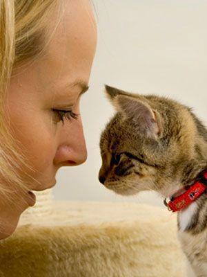 Learn these #interesting #facts about #cats. #pets