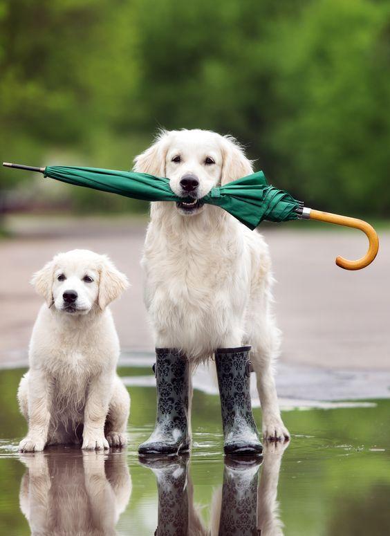 Pin On Rain Dewdrops